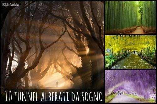 b2ap3_thumbnail_10-tunnel-alberati-da-sogno.jpg