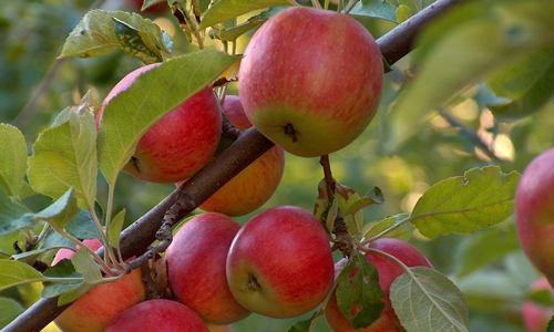 frutteti condivisi