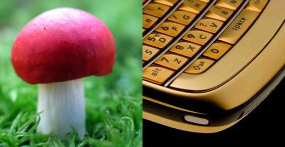 oro cellulari fungo