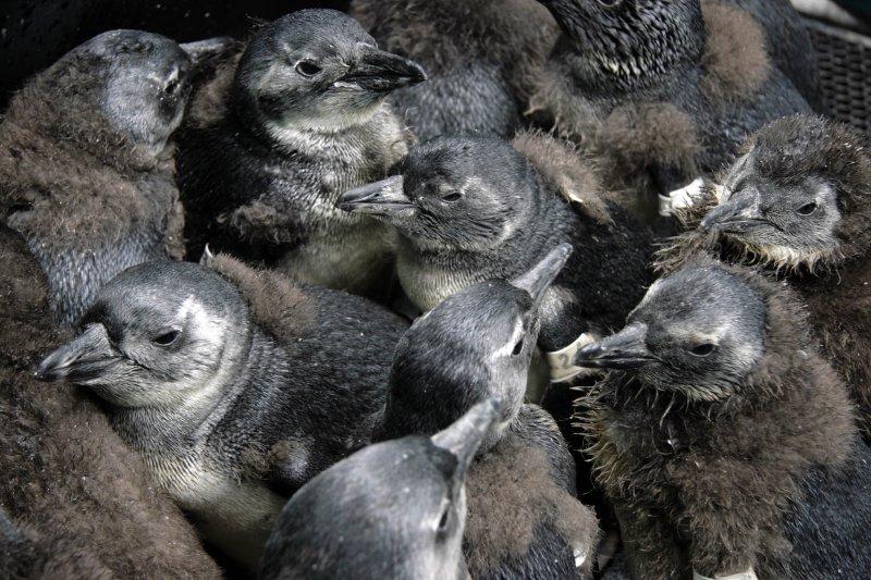 pinguini progetto2