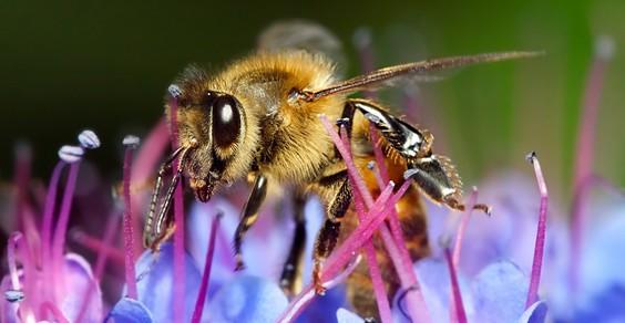salvare api fiori