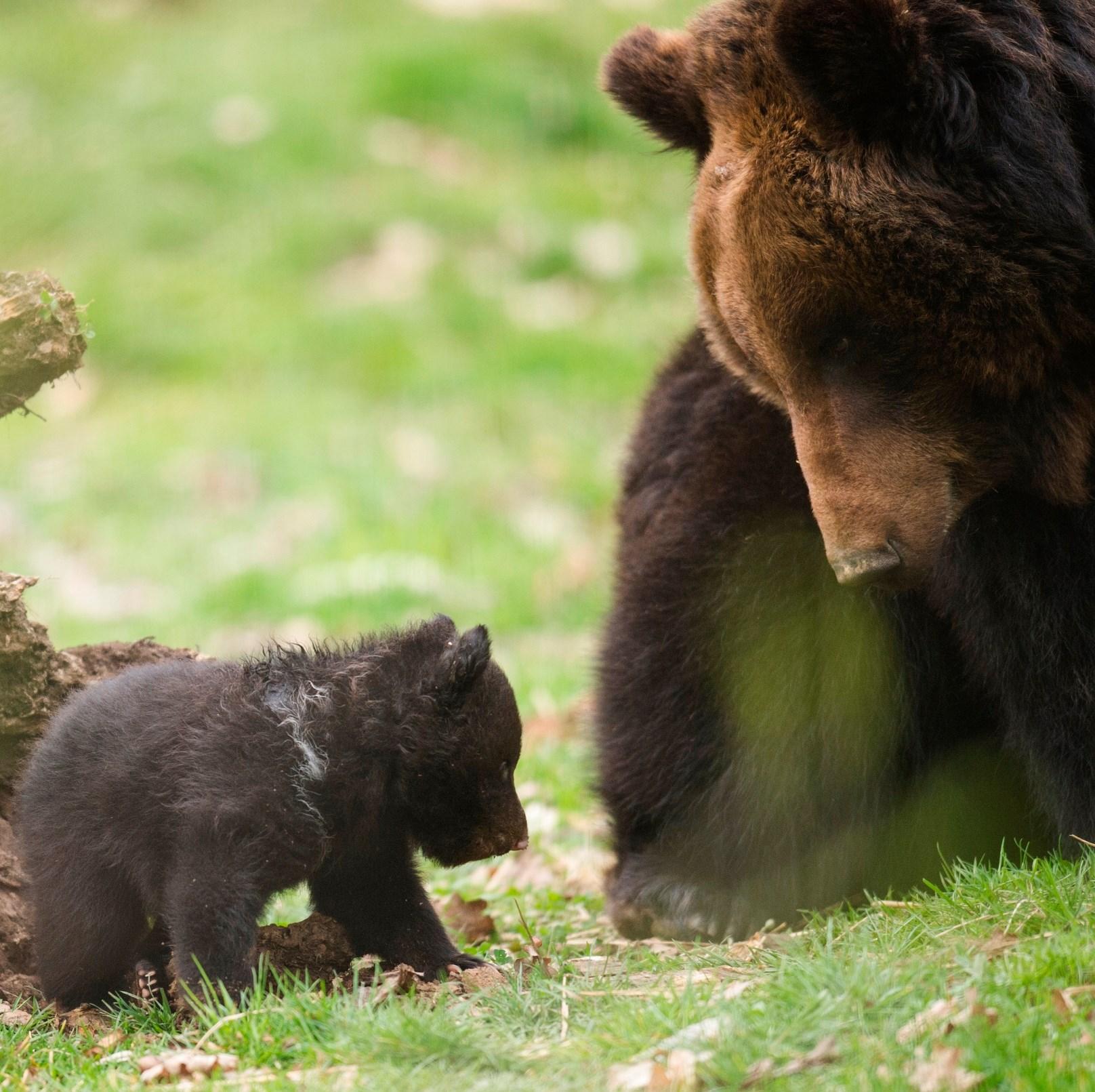 zoo orso4