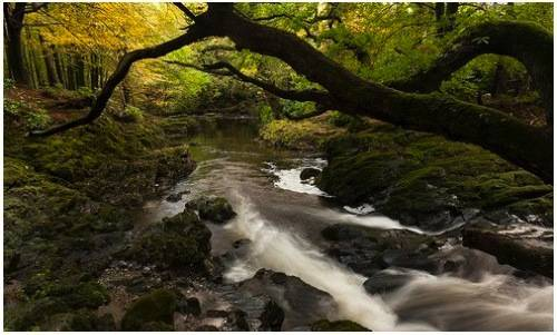 b2ap3_thumbnail_3-Tollymore-Forest-Park_20140512-013703_1.jpg