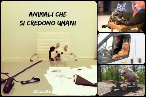 b2ap3_thumbnail_Animali-che-si-credono-umani.jpg