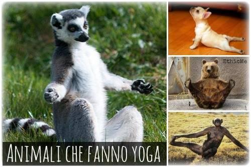 b2ap3_thumbnail_animal-che-fanno-yoga.jpg