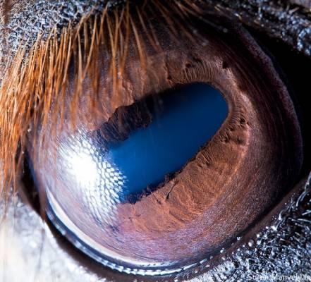 b2ap3_thumbnail_cavallo.jpg