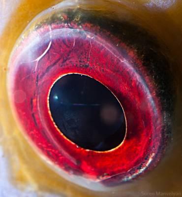 b2ap3_thumbnail_discusfish_20140514-095637_1.jpg