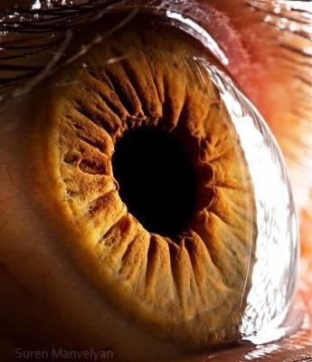 b2ap3_thumbnail_eye-macro-photo-12.jpg
