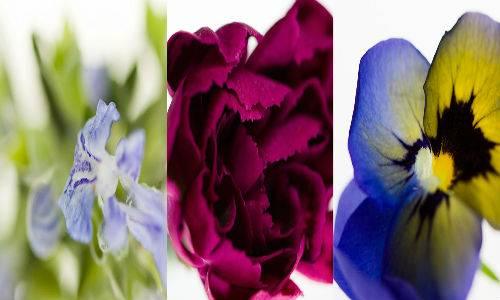 b2ap3_thumbnail_fiori_20140516-215618_1.jpg