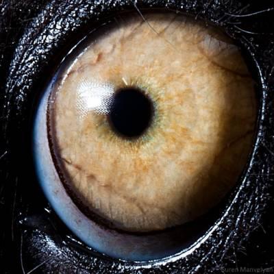b2ap3_thumbnail_lemure.jpg