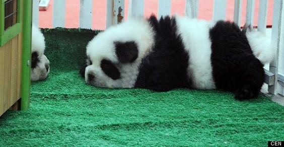 cani panda2