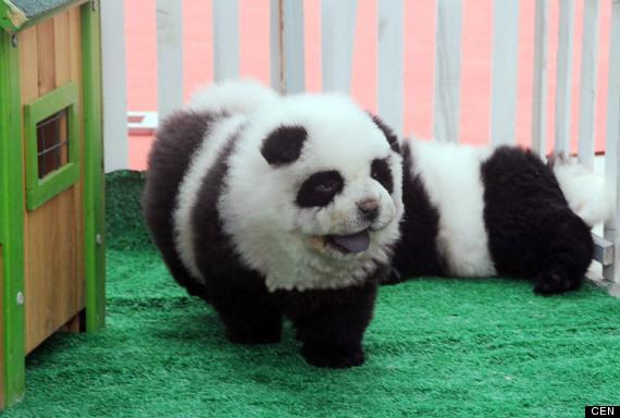 cani panda 3