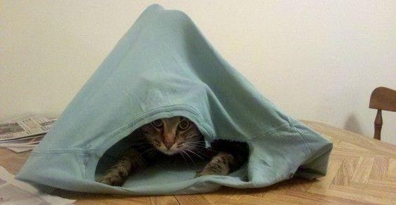 cat tent cover