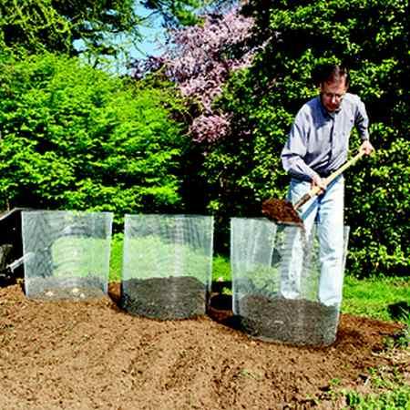 coltivare patate cilindro