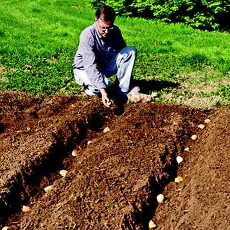 coltivare patate orto file