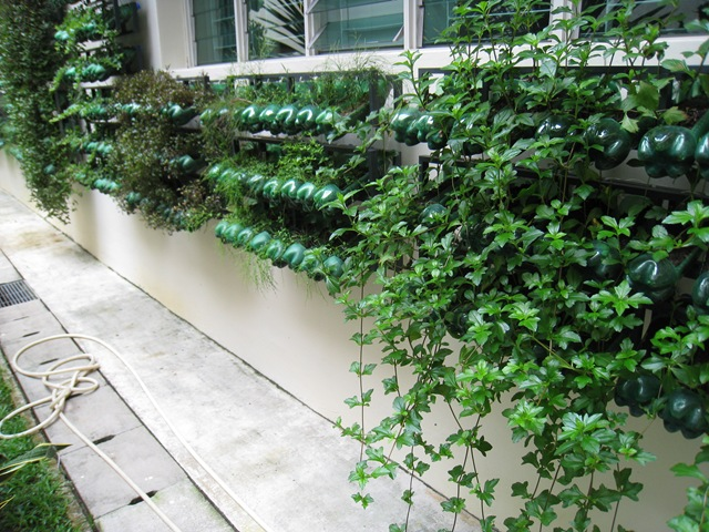 giardino verticale 6