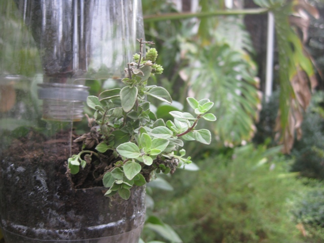 giardino verticale 8