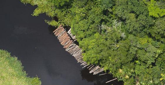 legno illegale cover