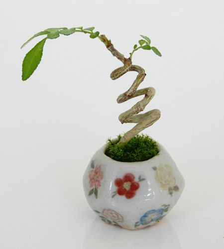 mini bonsai 2