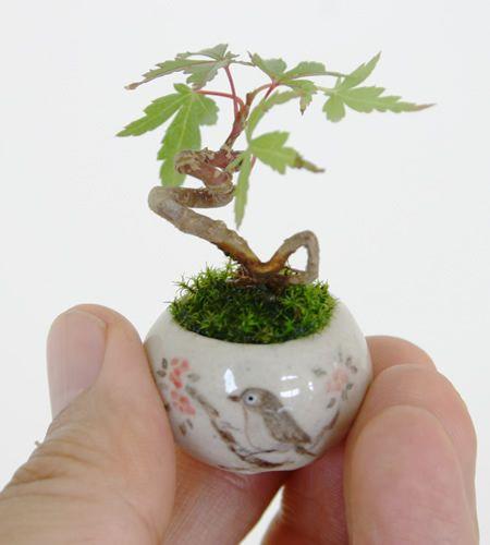 mini bonsai 3