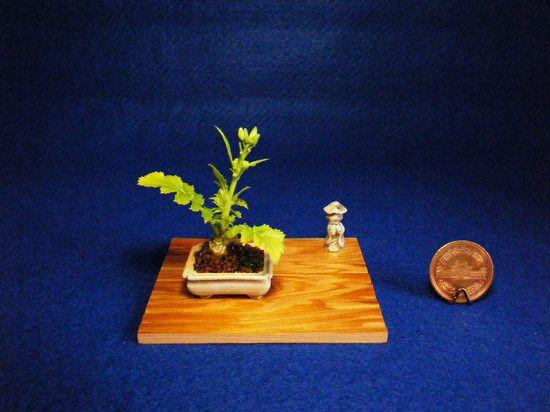 mini bonsai 4