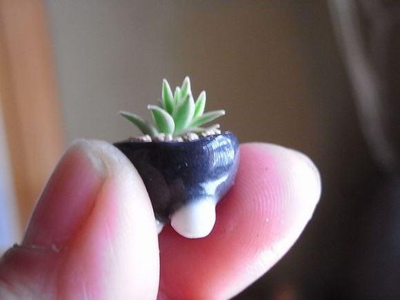 mini bonsai 5