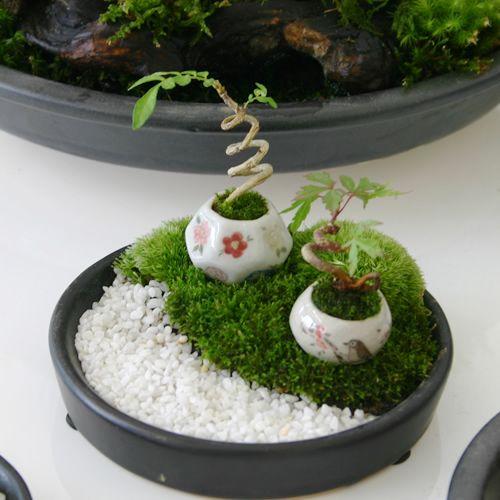mini bonsai 6