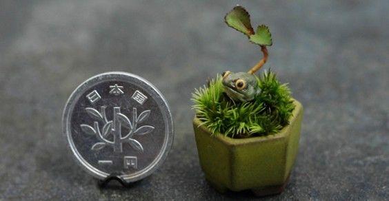 mini bonsai cover
