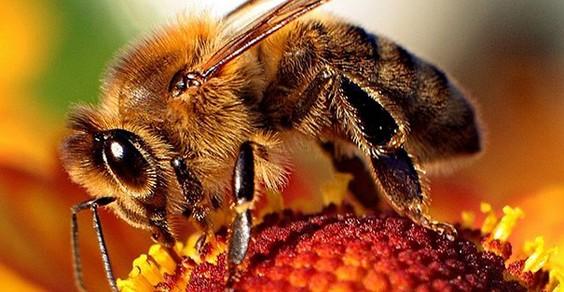 moria api pesticidi harvard