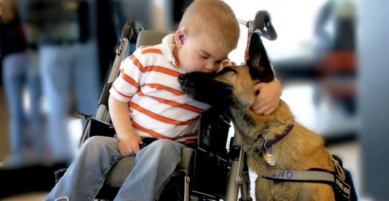 pet therapy psichiatria
