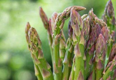 piante perenni orto