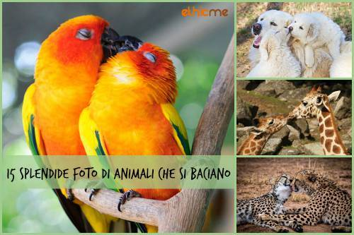 b2ap3_thumbnail_15-splendide-foto-di-animali-che-si-baciano.jpg