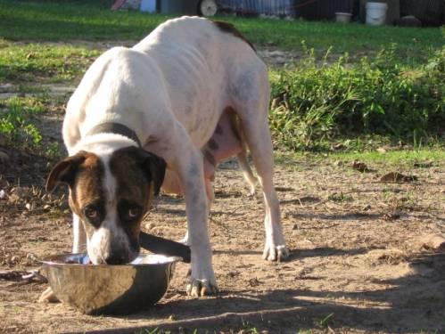 b2ap3_thumbnail_cani-catena-12.jpg