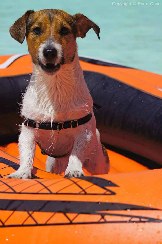 resort cani