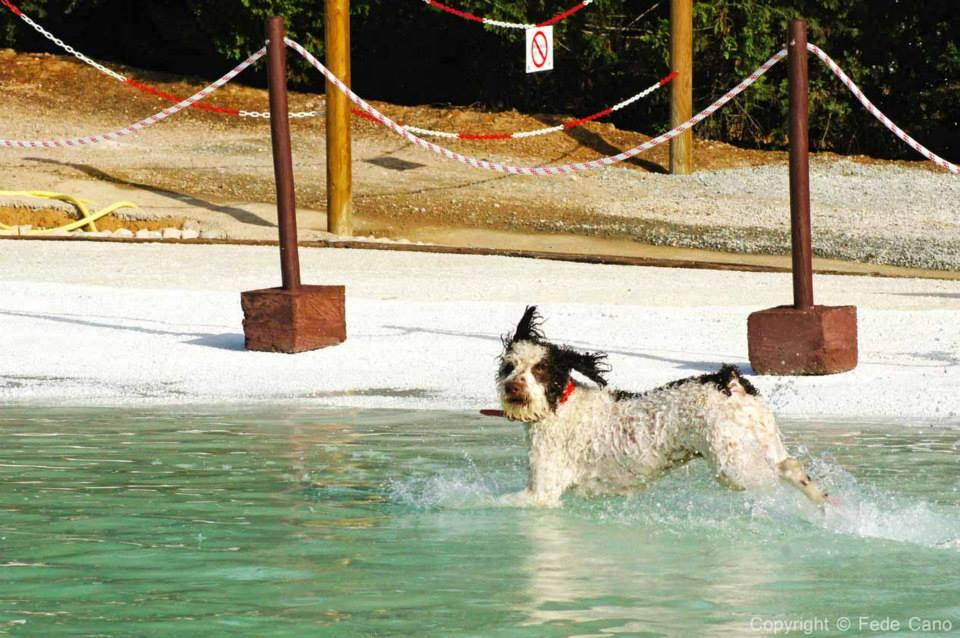 resort cani2