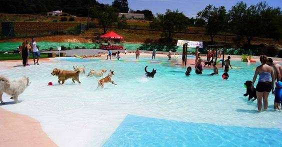 resort cani6
