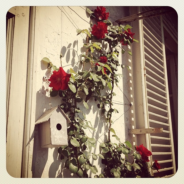 Total eclipse of the heart. rose birdhouse moon eclipse haveaniceday
