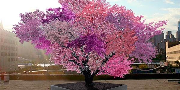 albero 40 frutti cover