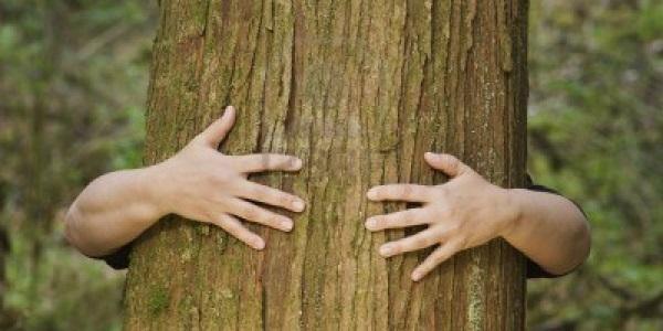 albero salvavita