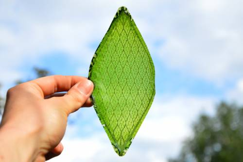 b2ap3_thumbnail_Silk-Leaf-by-Julian-Melchiorri_dezeen_01_644.jpg