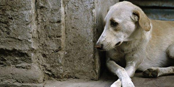 campagne contro abbandono animali cani
