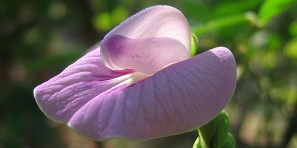 fiori strani