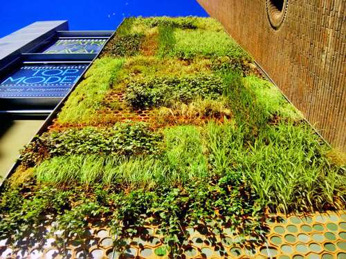 giardino verticale barcellona 1