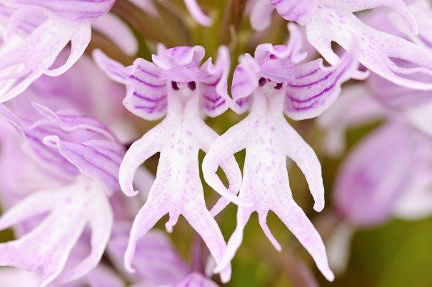 orchidea uomo nudo