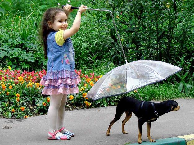 pet-umbrella-dogs-pets-design-ideas-3