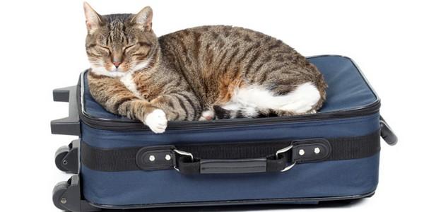 viaggiare vacanze gatti