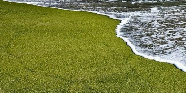 Papakolea green beach la meravigliosa spiaggia verde 03