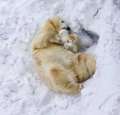 b2ap3_thumbnail_Bellissime-foto-di-mamme-animali-con-i-loro-cuccioli-02.jpg