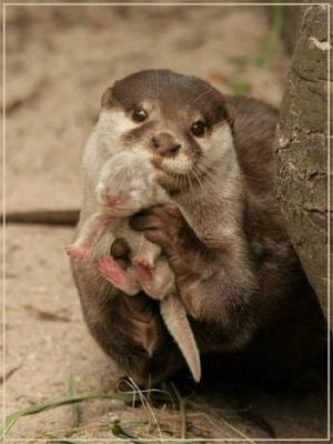 b2ap3_thumbnail_Bellissime-foto-di-mamme-animali-con-i-loro-cuccioli-05.jpg