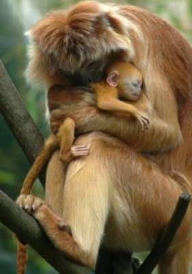 b2ap3_thumbnail_Bellissime-foto-di-mamme-animali-con-i-loro-cuccioli-07.jpg